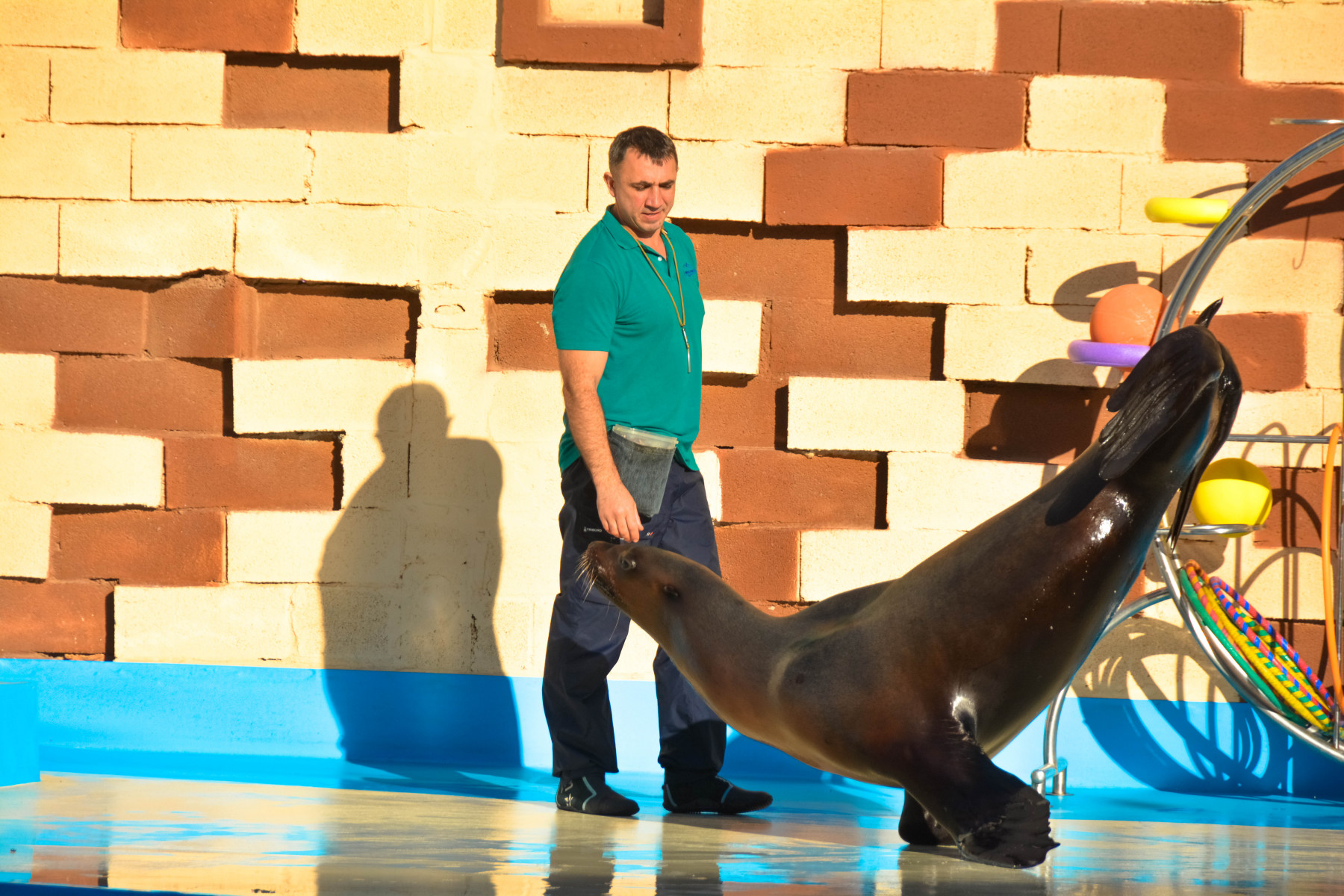 Agadir-Dolphin-World-11-из-64