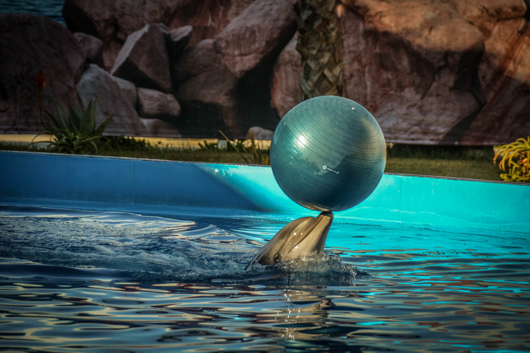Agadir-Dolphin-World-37-из-64