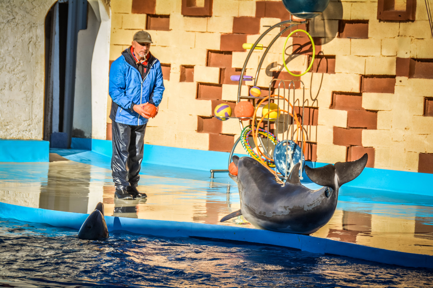 Agadir-Dolphin-World-39-из-64