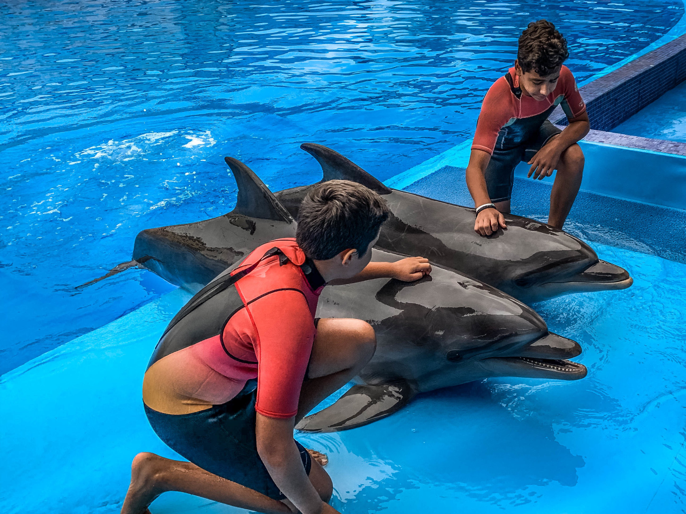 Dolphin Assisted Therapy (10 из 20)