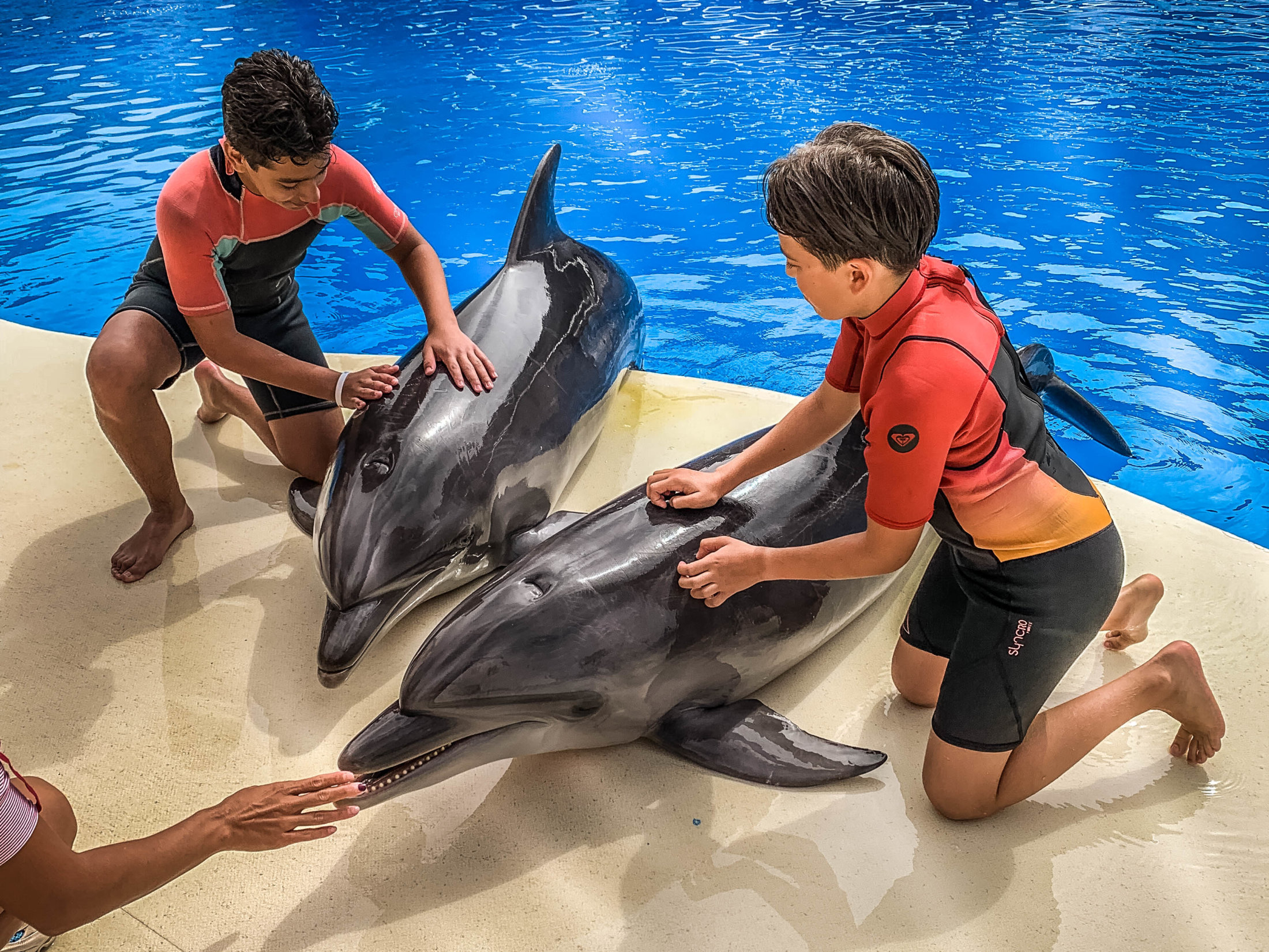 Dolphin Assisted Therapy (1 из 20)