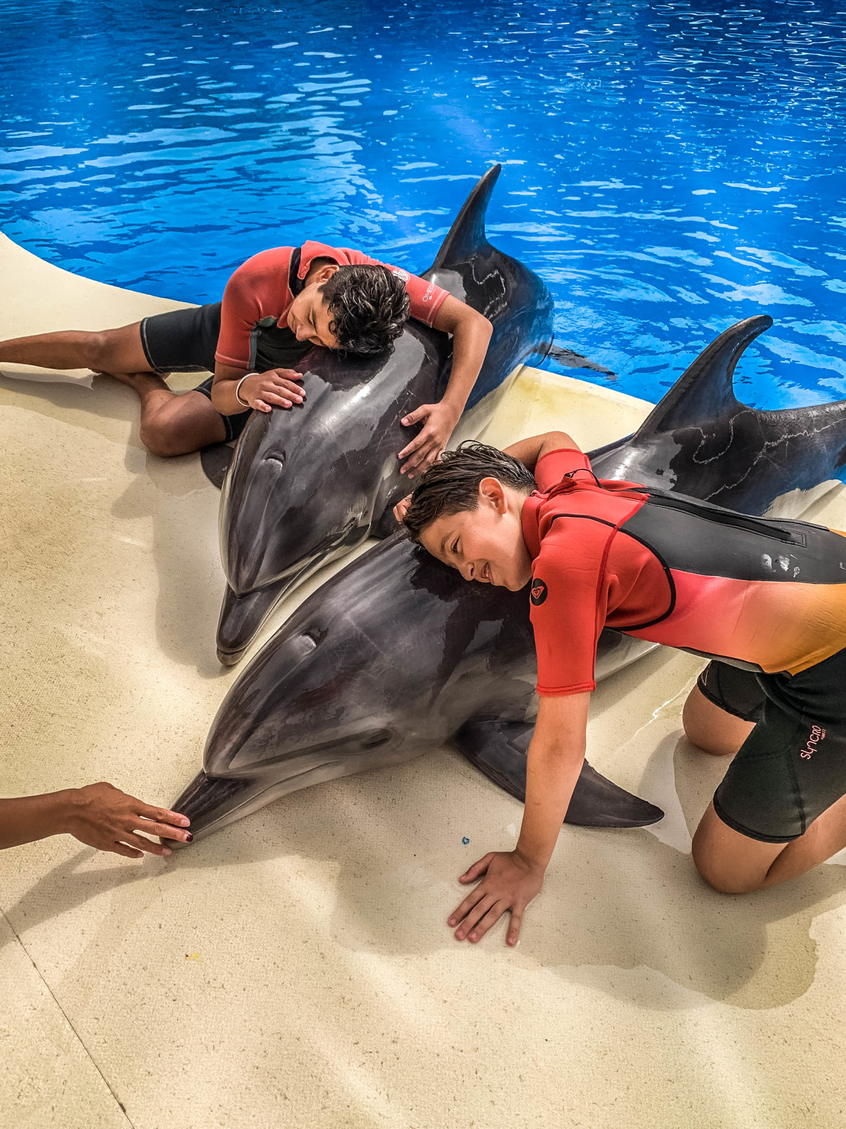 Dolphin Assisted Therapy (2 из 20)