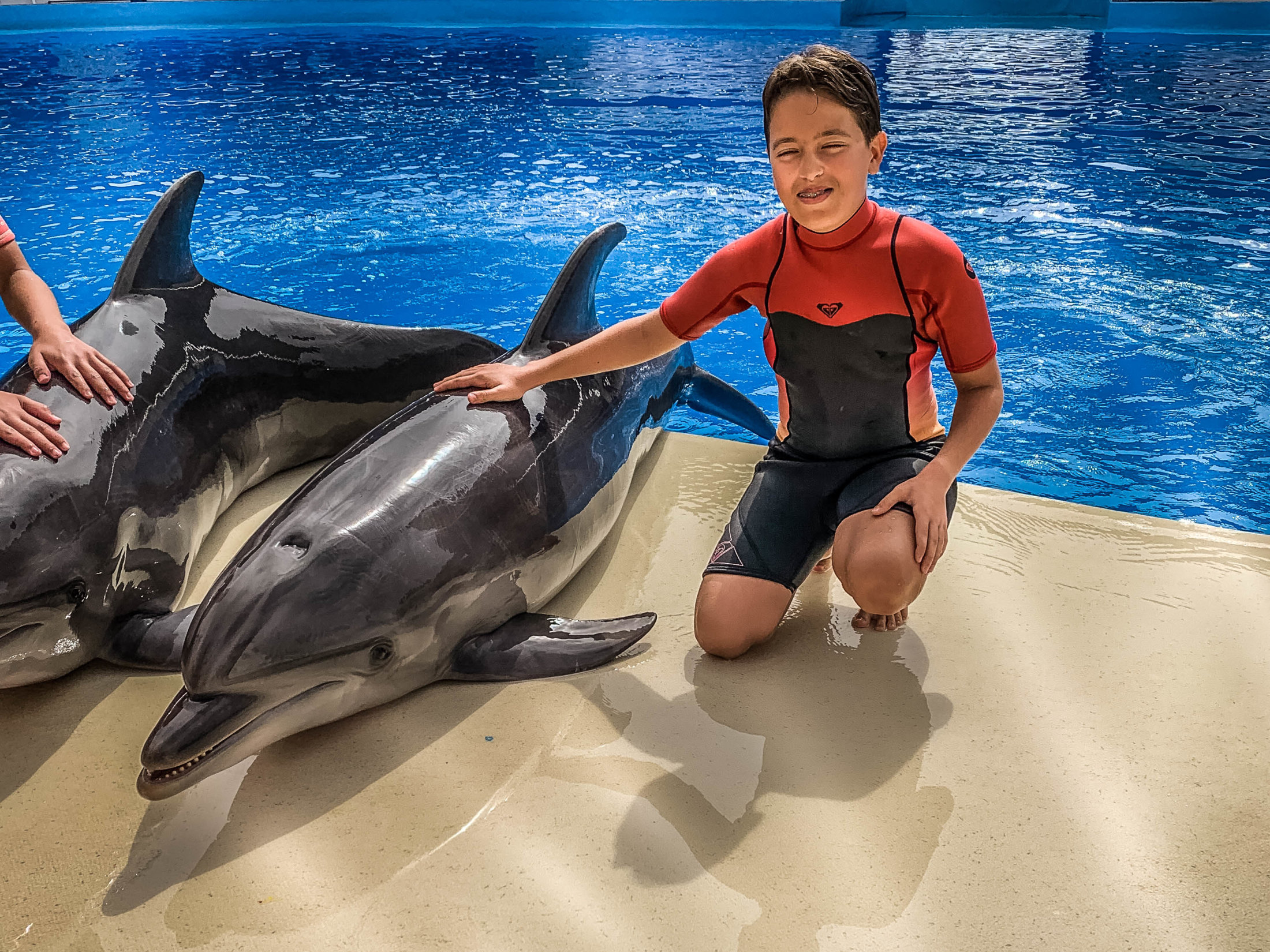 Dolphin Assisted Therapy (3 из 20)