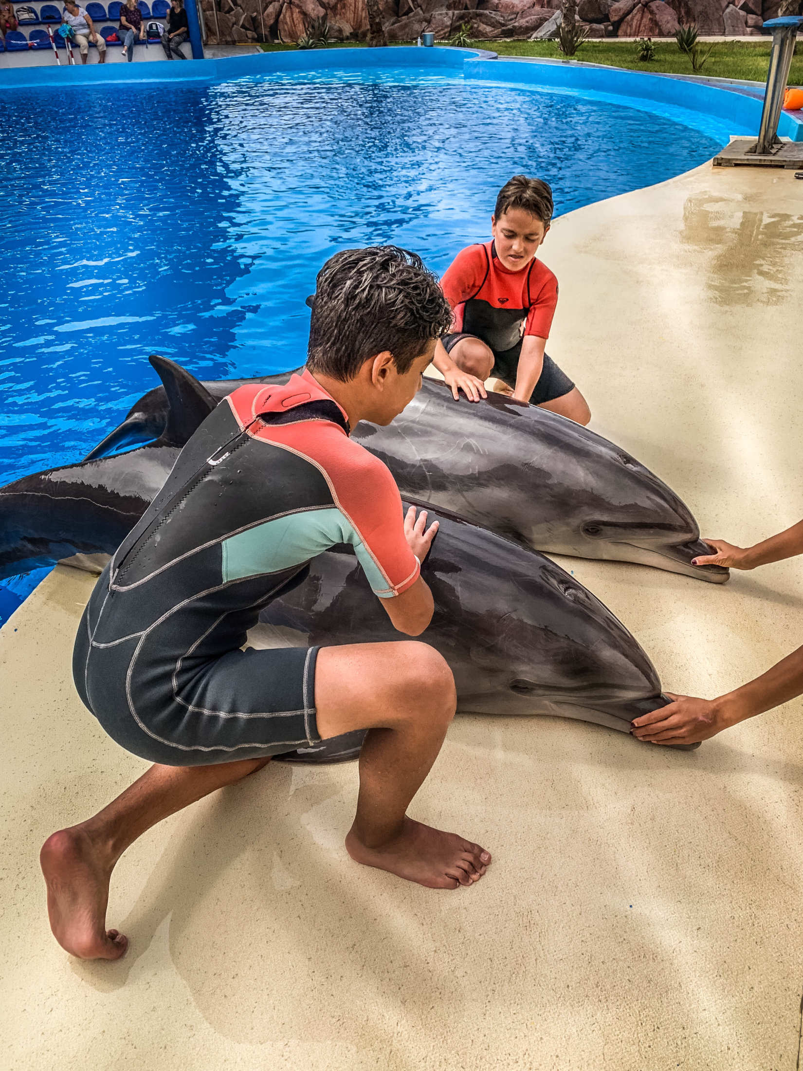 Dolphin Assisted Therapy (4 из 20)