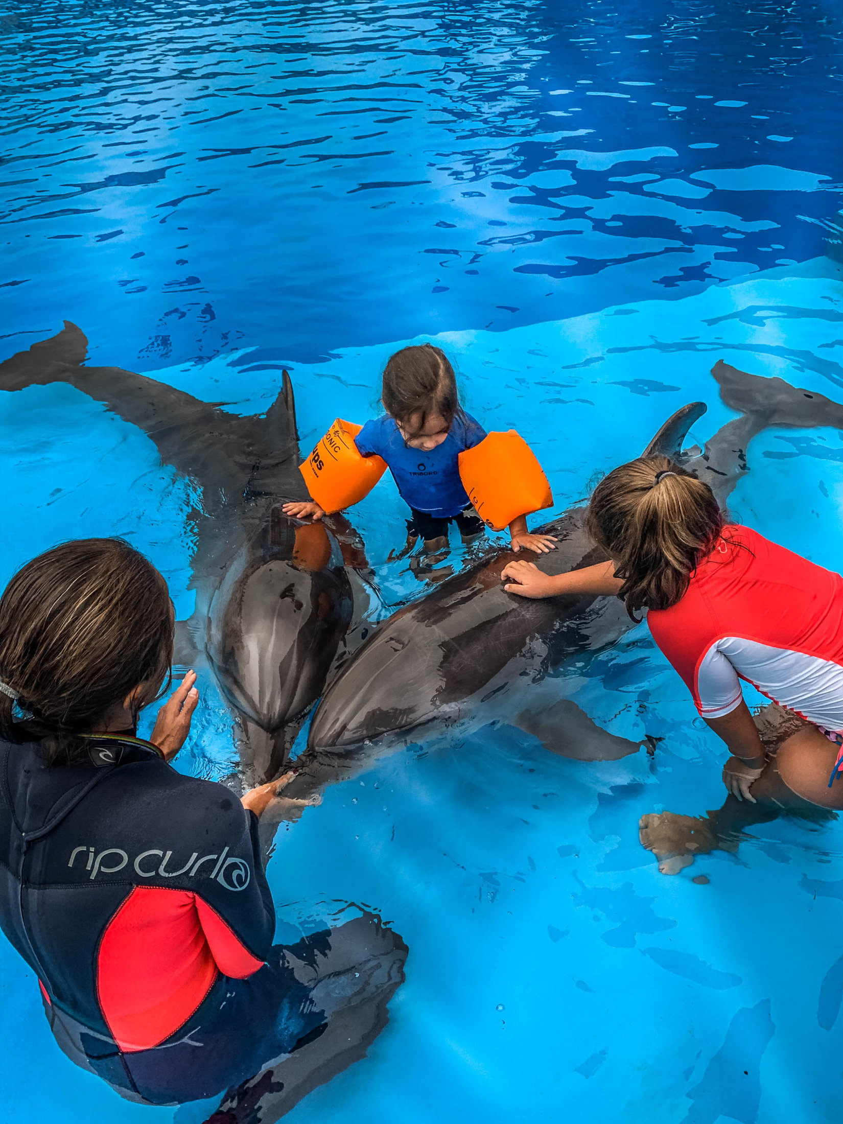 Dolphin Assisted Therapy (6 из 20)