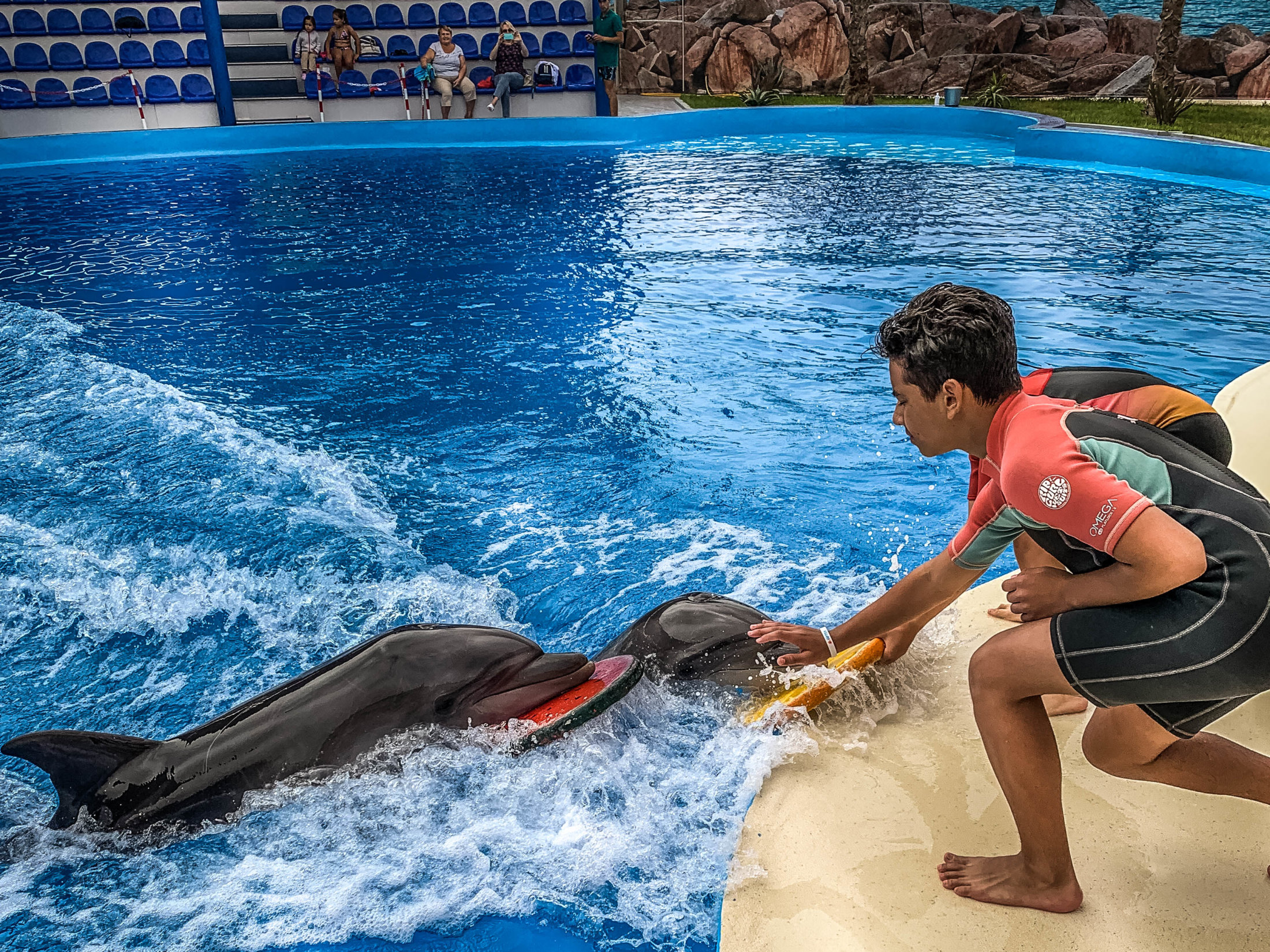 Dolphin Assisted Therapy (7 из 20)